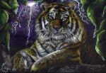 :Bday Gift: Thunder Tiger by mustingel
