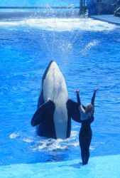 SeaWorld - Fountain by kngdmhrts2