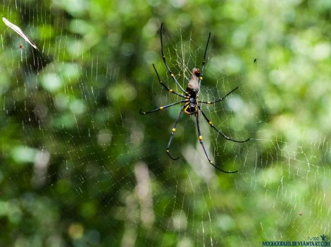 Spider by Moohoodles
