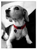 Dotty the Dog 01 by nibbler-photo