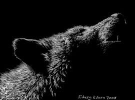 Howling ACEO by sidneyeileen