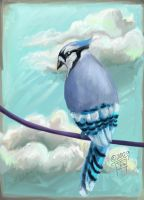 Trickster Blue Jay by delightedmuse
