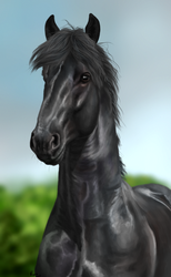 Friesian portrait by xClarXCheex