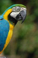 Parrot by End4000