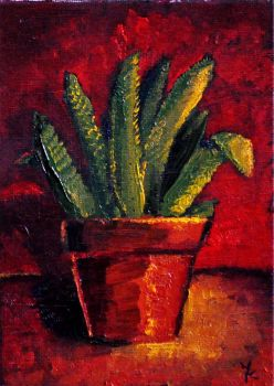 aloes study1 by shinius