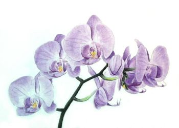 Orchid 1 by Krats