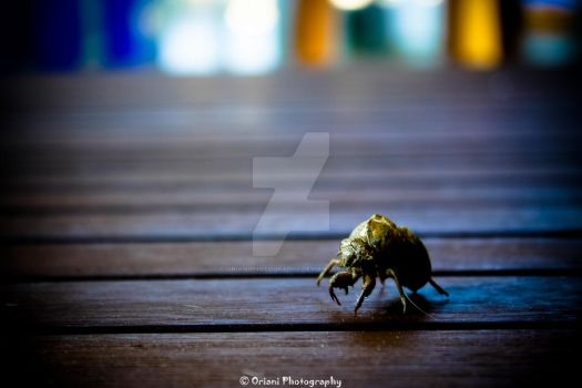 Bug 2 by OrianiPhotography