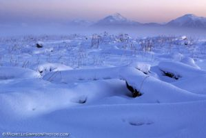 Snow Scape 1 by MSimpsonPhotos