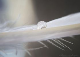 Softness in a drop by FrancescaDelfino