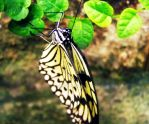 Black and White Butterfly by flamingpig