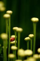 Ladybird by Kharman