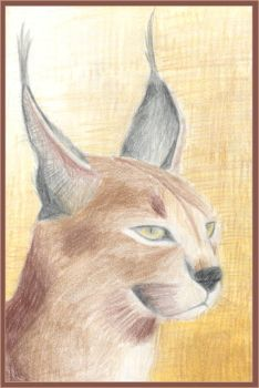 Caracal by Kezzi-Rose