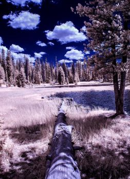 Infrared Life by zoomzoom