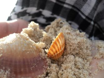 Shells, sands and homeland by PaLiLinz