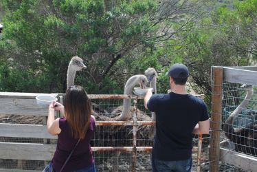Couple Feeding Ostriches by Colonel-Knight-Rider
