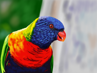 Lorikeet by ArtofJefferyHebert
