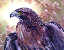 Red Tailed Hawk by Alanpaints