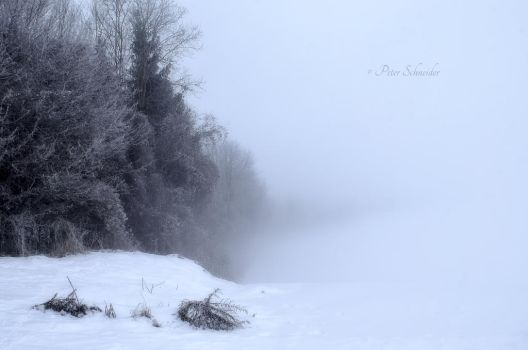 Cold foggy. by Phototubby