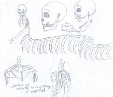 Naga Skeleton Sketches by City-of-Faith