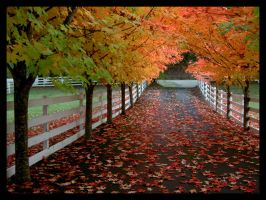 Fall Series 04 by xelopid