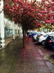 Blossoms after the rain by Meterious