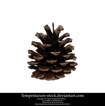 Pinecone 2-Stock by tempestazure-Stock