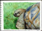 Watercolor studying- turtle by ItsMyUsername