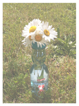 Daisies in a Bottle by jadefyres-freedom