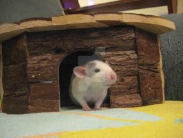 Firi Rat in the cabin on the couch. by Eternatease