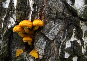 Fungus and the tree by Nickdan