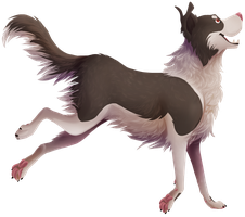 border collie frend by SurfMutt