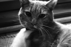 Dexter the Cat by tommymurphy