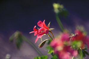 Sunkissed by K-Boyd-Photography