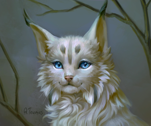 Lynx by Teumes