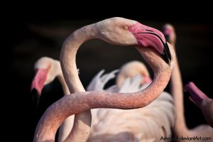 Flamingo Knot by amrodel
