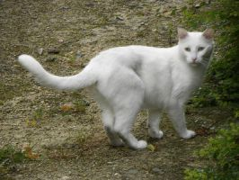 .Le chat blanc 3 by Flore-stock