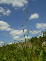 blue sky and grass by WeLikeDirt