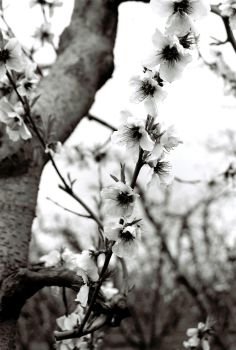 Blossom Trail 2 by psychoxpathic