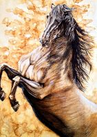 Coffee Horse by Christa-S-Nelson