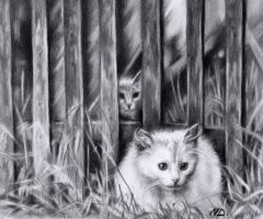 White Cat by Acacia13