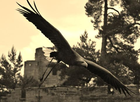 Wings of old by stitchyG