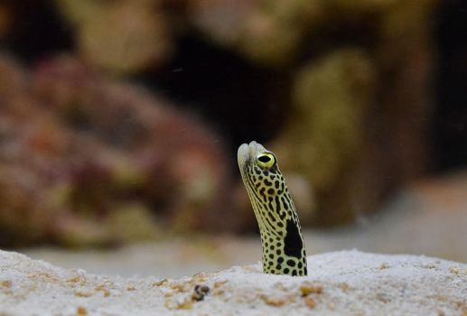Small Eel by EndOfGreatness