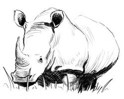 Rhino by MrEclectic