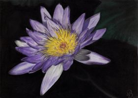 Water Lily by BDN1991