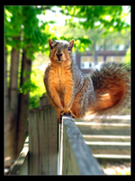 Squirrel by niclake13