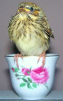 Bird  N  Cup 3 by Penny-Stock
