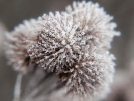 Ice 3 by Inilein