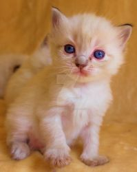 little paw kitty by Carameldreamsx