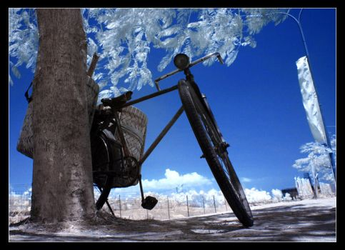 The Bicycle II by momoclax