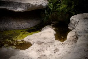 Moss On Water by PhillyPuddy